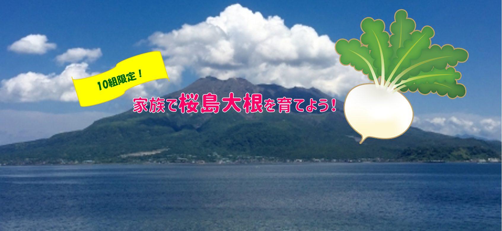でっかい!桜島大根栽培きょうしつ(家族向け)